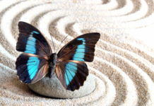 act; acceptance commitment therapy; accettazione
